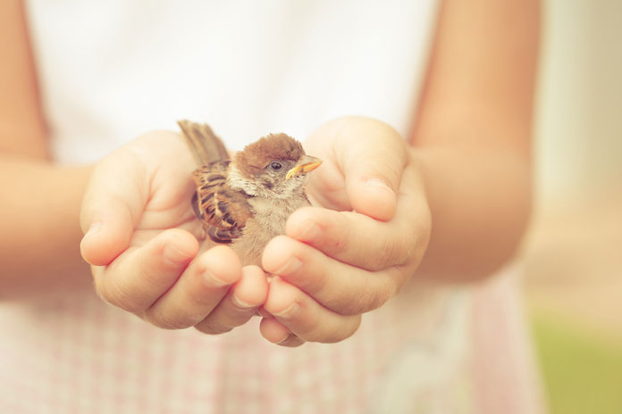 vogel-kind