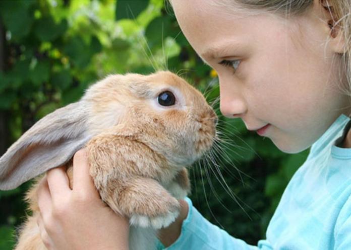 Mädchen hält Hasen - Haustier