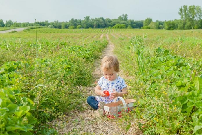 Baby isst Erdbeeren im Feld