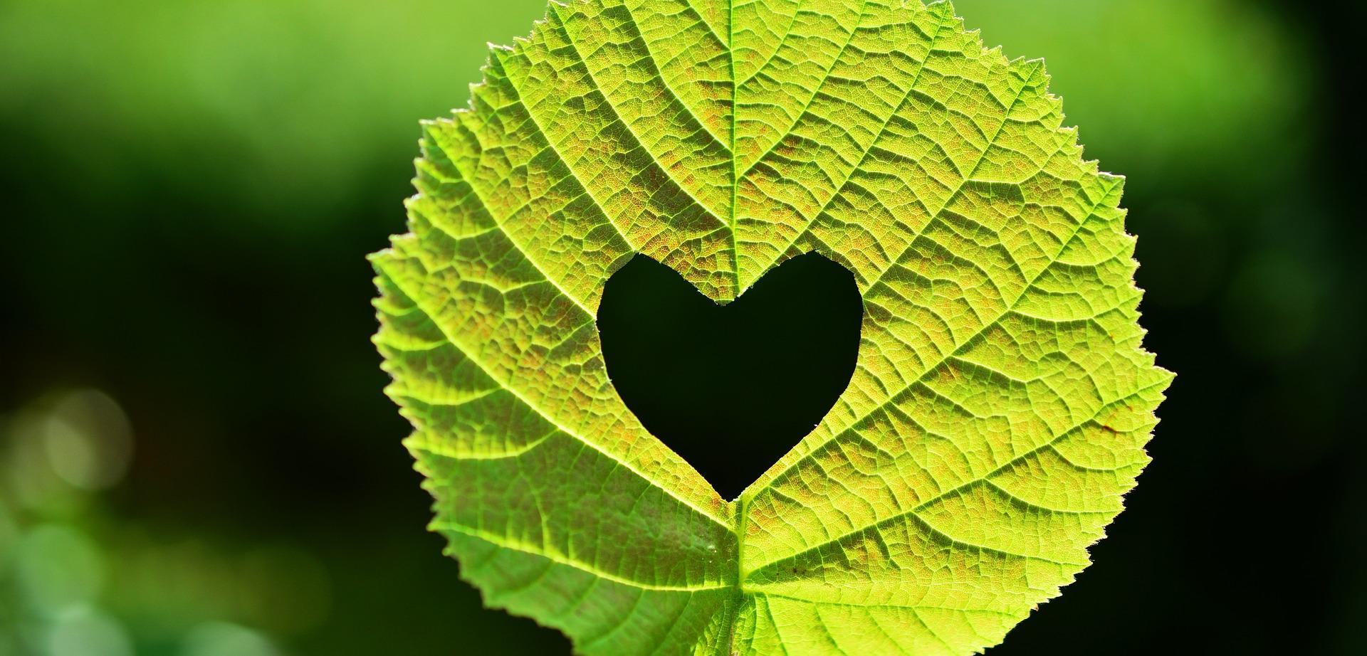 grünes Blatt mit eingestanztem Herz
