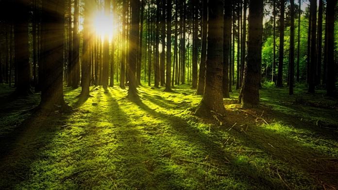 Die Sonne geht in einem Wald auf.